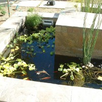 Koi ponds and plants are a unique addition to your home. We can do it all.