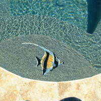 Fish tile mosaics are great additions to any pool and spa. They come in several styles and colors.
