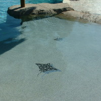 PLEASE DON'T FEED THE FISH!! Is this your backyard or somewhere in Hawaii? Beautiful decorative tiles will bring your pool to life.