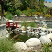 Koi Pond and pool were designed to blend together as they would in nature.