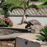 Concrete tortoise fills in the landscape area.